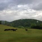 Louisville Trip :: Day 4 :: Blackberry Farm